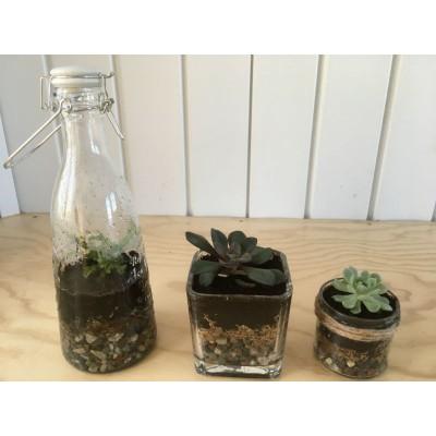 Atelier : Trio de terrariums