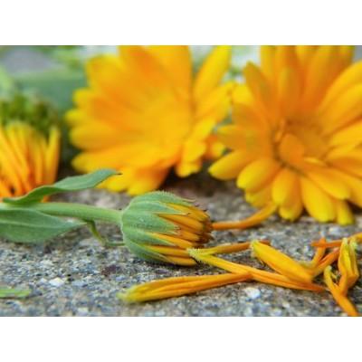 Atelier-conférence : 4 Saisons avec les plantes médicinales