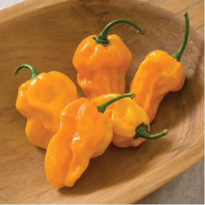 Piment 'Habanero Numex Suave Orange' 3L