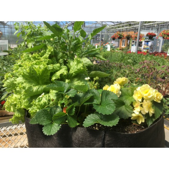 Atelier pour enfant : Jardin potager en pot - 26 mai 2019 - Complet -