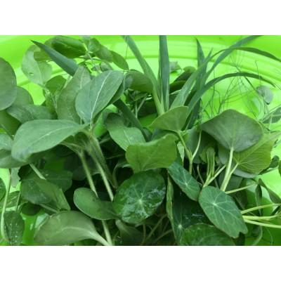 Conférence : germinations, pousses et micro-verdures